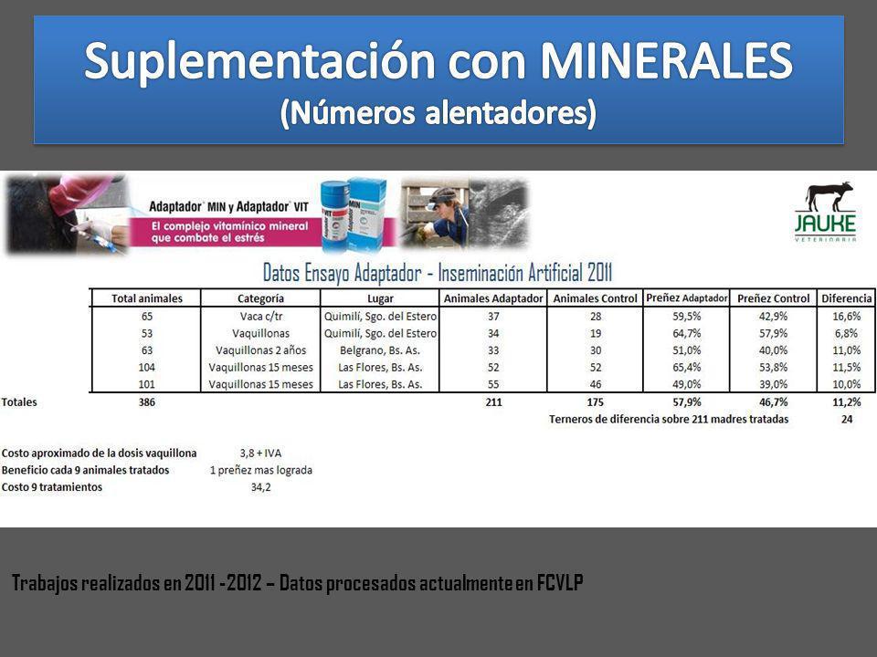 Suplementación con MINERALES (Números alentadores)