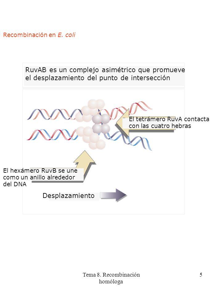 Tema 8. Recombinación homóloga