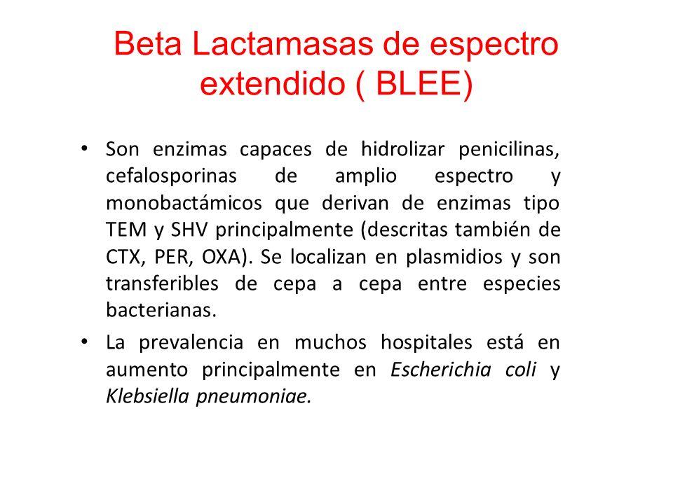 Beta Lactamasas de espectro extendido ( BLEE)