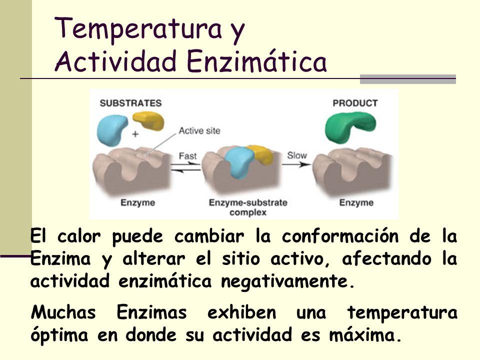 Temperatura y Actividad Enzimática