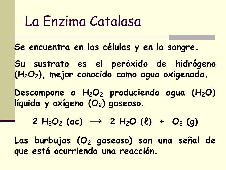 La Enzima Catalasa Se encuentra en las células y en la sangre.