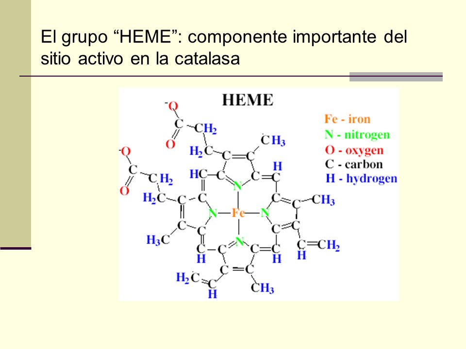 El grupo HEME : componente importante del sitio activo en la catalasa