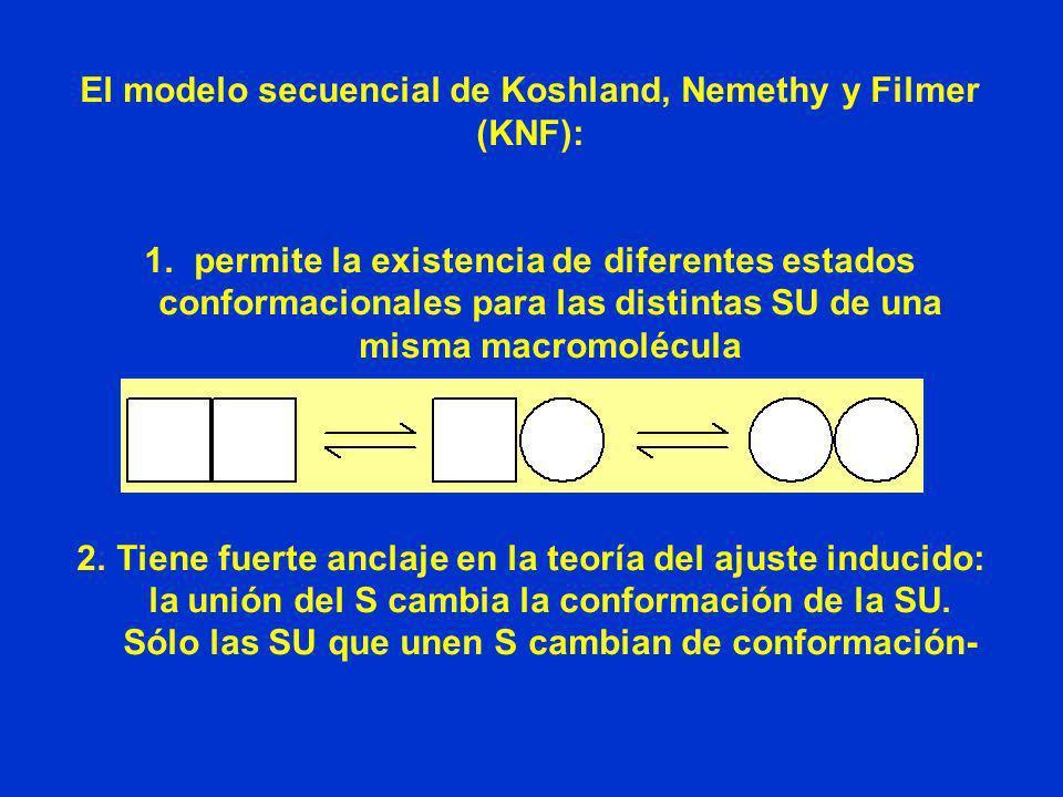 El modelo secuencial de Koshland, Nemethy y Filmer