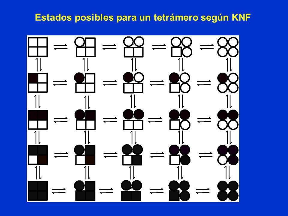 Estados posibles para un tetrámero según KNF