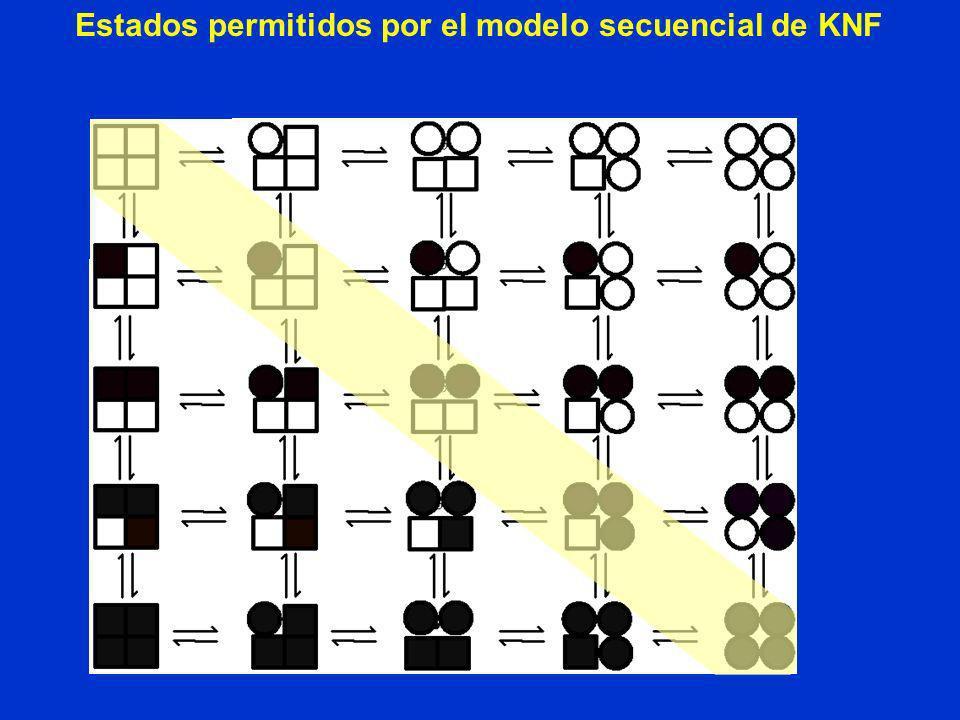 Estados permitidos por el modelo secuencial de KNF