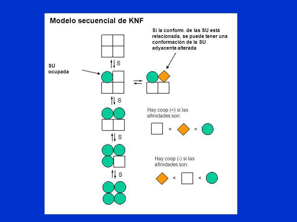 Modelo secuencial de KNF