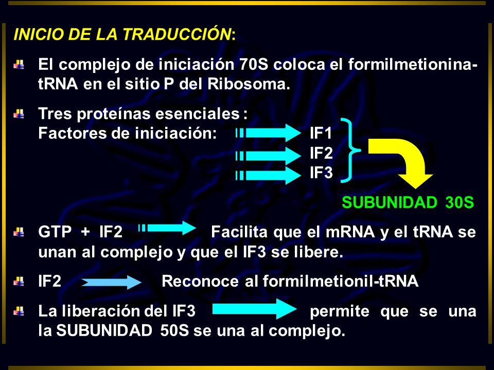 INICIO DE LA TRADUCCIÓN: