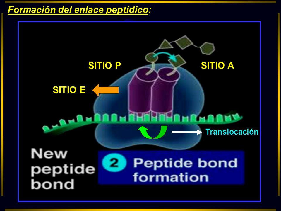 Formación del enlace peptídico: