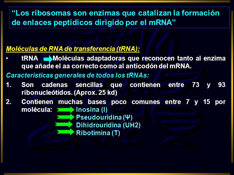 Los ribosomas son enzimas que catalizan la formación de enlaces peptidicos dirigido por el mRNA