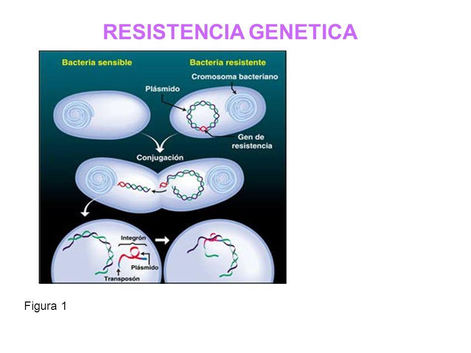 RESISTENCIA GENETICA Figura 1