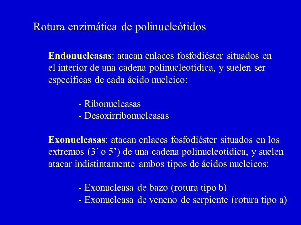 Rotura enzimática de polinucleótidos