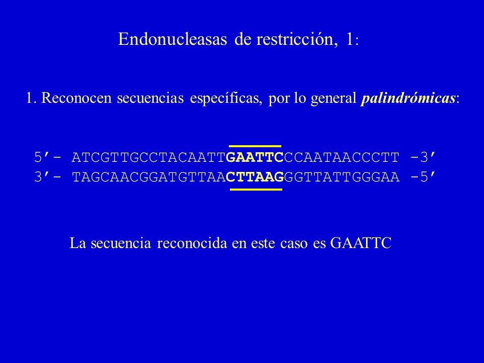 Endonucleasas de restricción, 1: