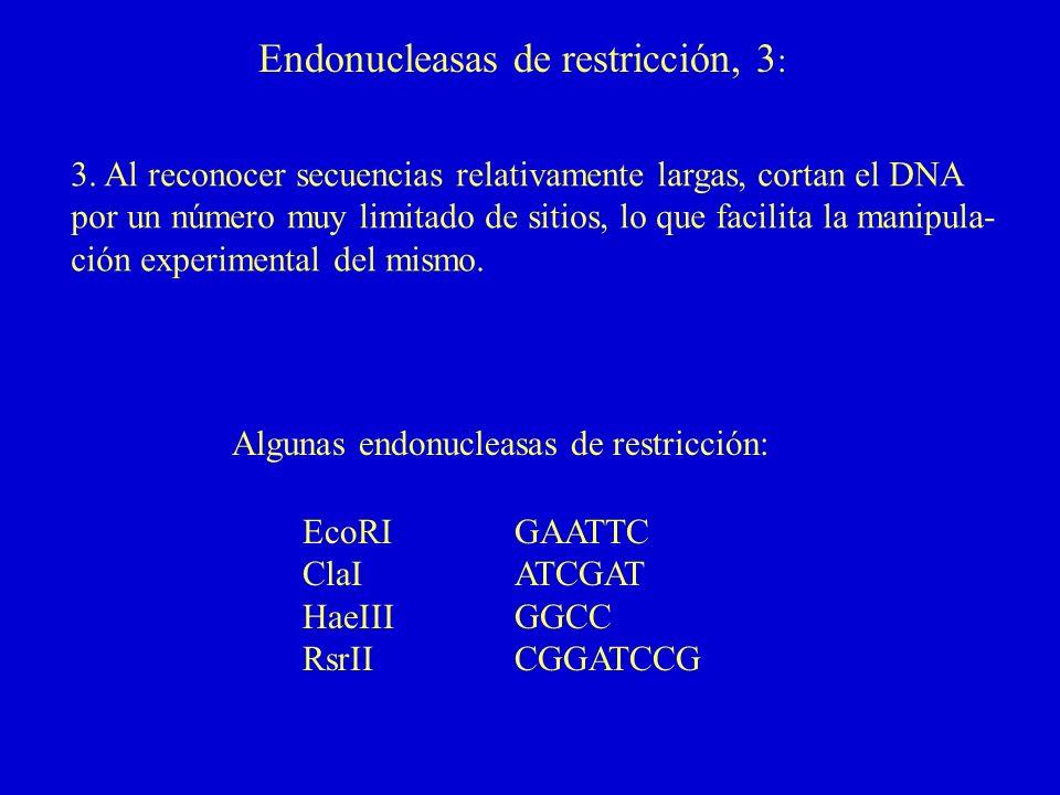 Endonucleasas de restricción, 3: