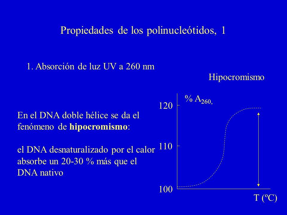 Propiedades de los polinucleótidos, 1