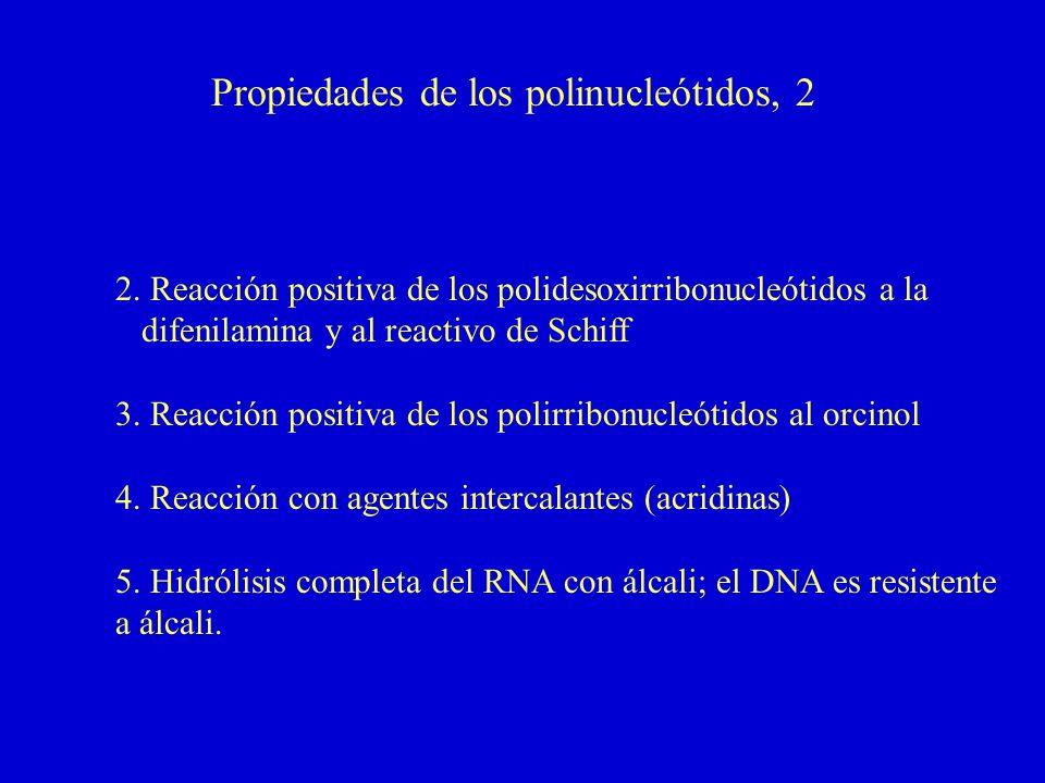 Propiedades de los polinucleótidos, 2