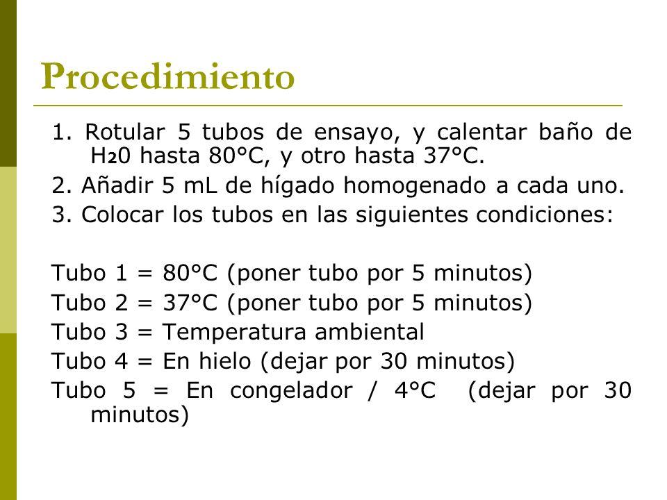 Procedimiento 1. Rotular 5 tubos de ensayo, y calentar baño de H20 hasta 80°C, y otro hasta 37°C. 2. Añadir 5 mL de hígado homogenado a cada uno.