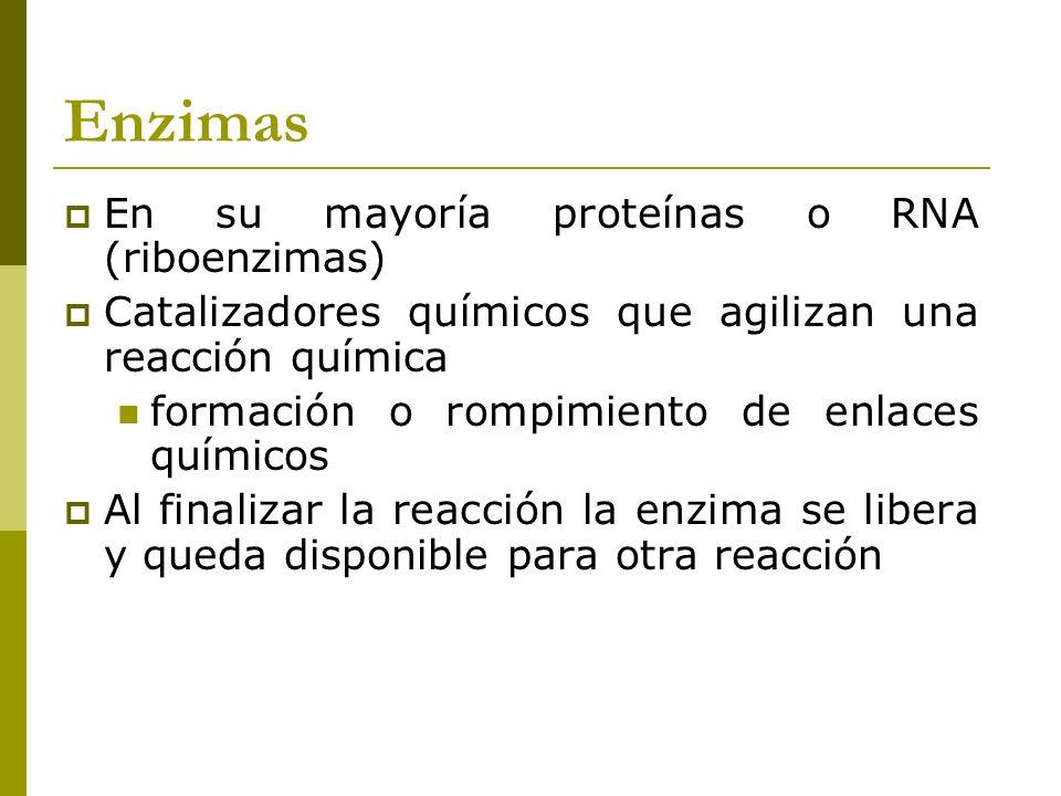 Enzimas En su mayoría proteínas o RNA (riboenzimas)