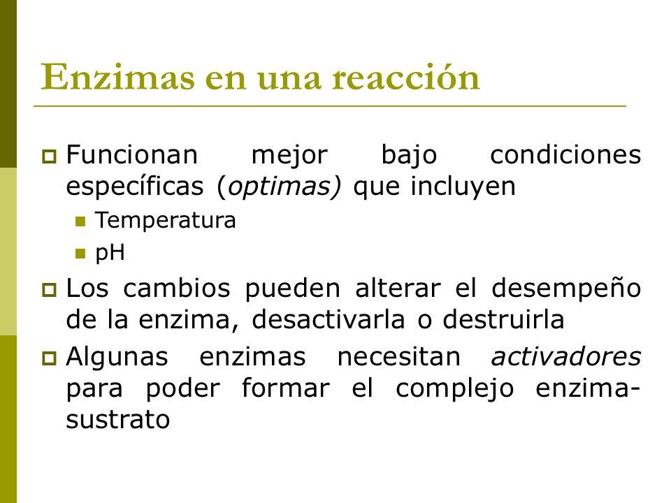 Enzimas en una reacción