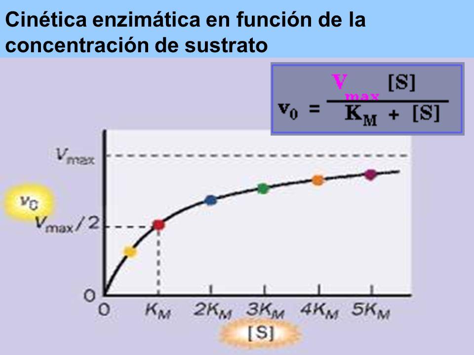 Cinética enzimática en función de la concentración de sustrato