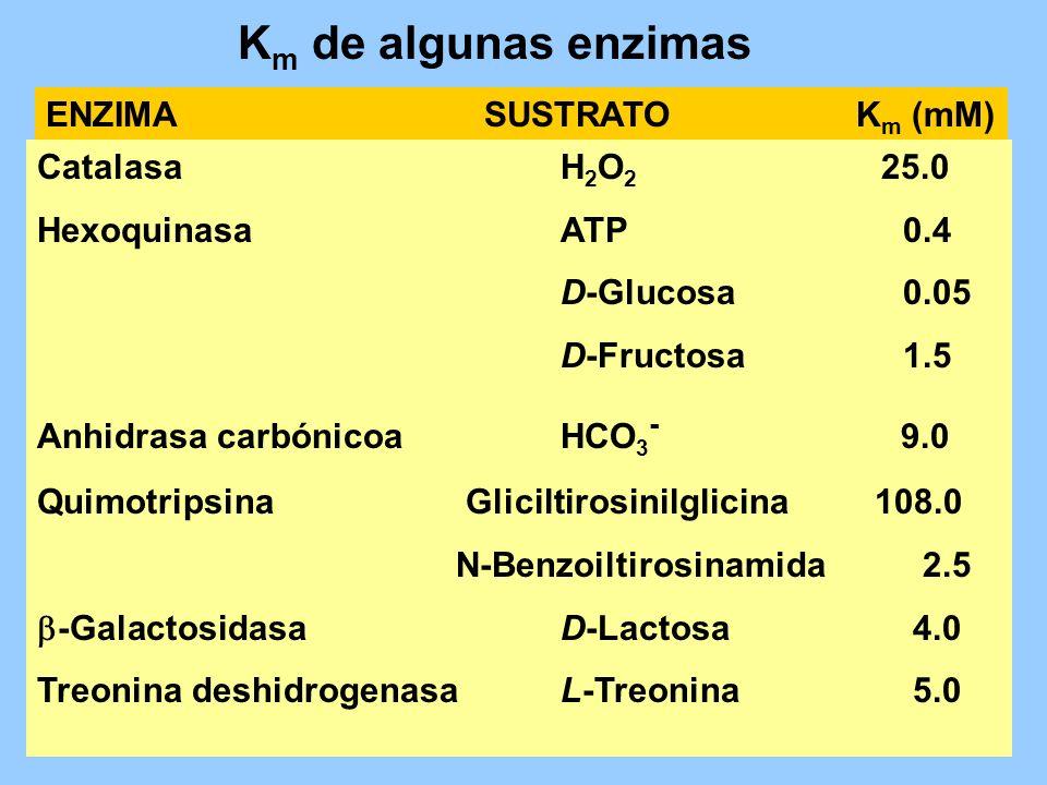 Km de algunas enzimas ENZIMA SUSTRATO Km (mM) Catalasa H2O2 25.0