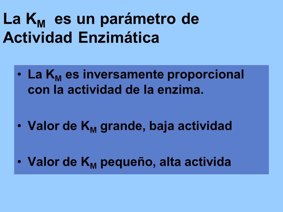 La KM es un parámetro de Actividad Enzimática