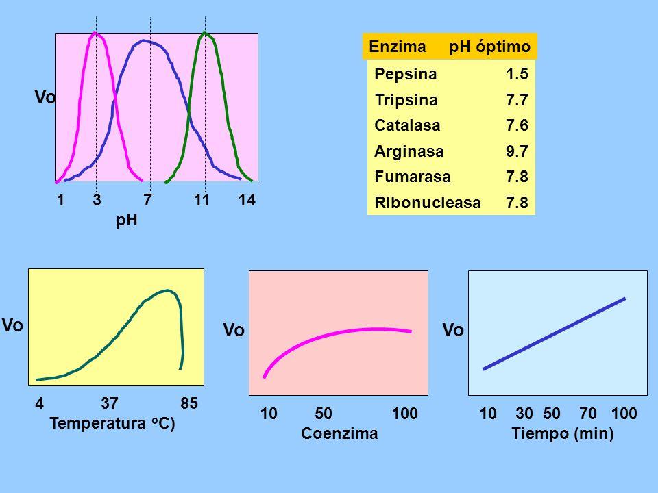 Vo Vo Vo Vo 1 3 7 11 14 pH Pepsina 1.5 Tripsina 7.7 Catalasa 7.6