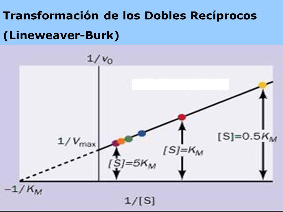 Transformación de los Dobles Recíprocos (Lineweaver-Burk)
