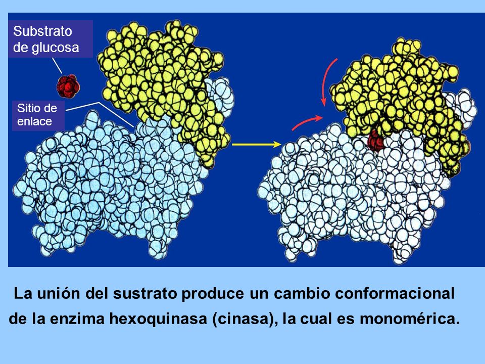 Substrato de glucosa Sitio de. enlace.