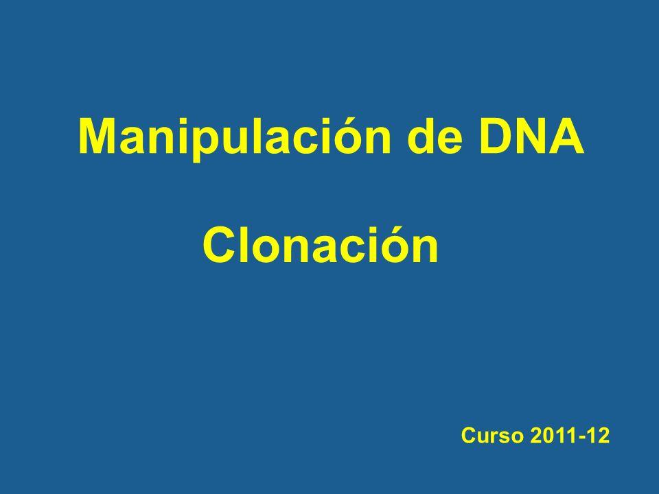 Manipulación de DNA Clonación Curso 2011-12