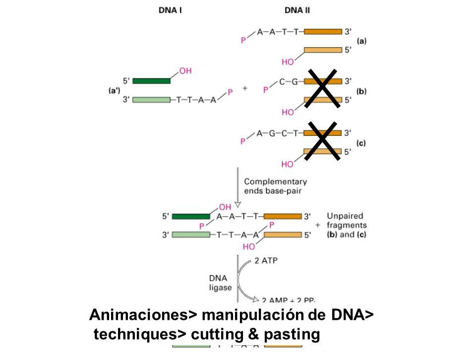 Animaciones> manipulación de DNA>