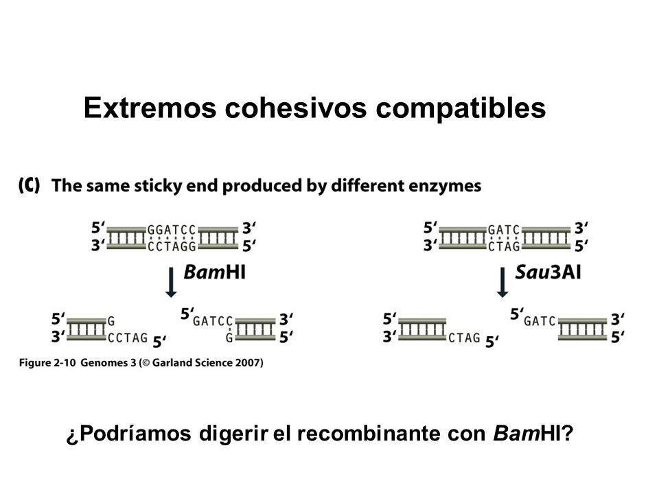 Extremos cohesivos compatibles