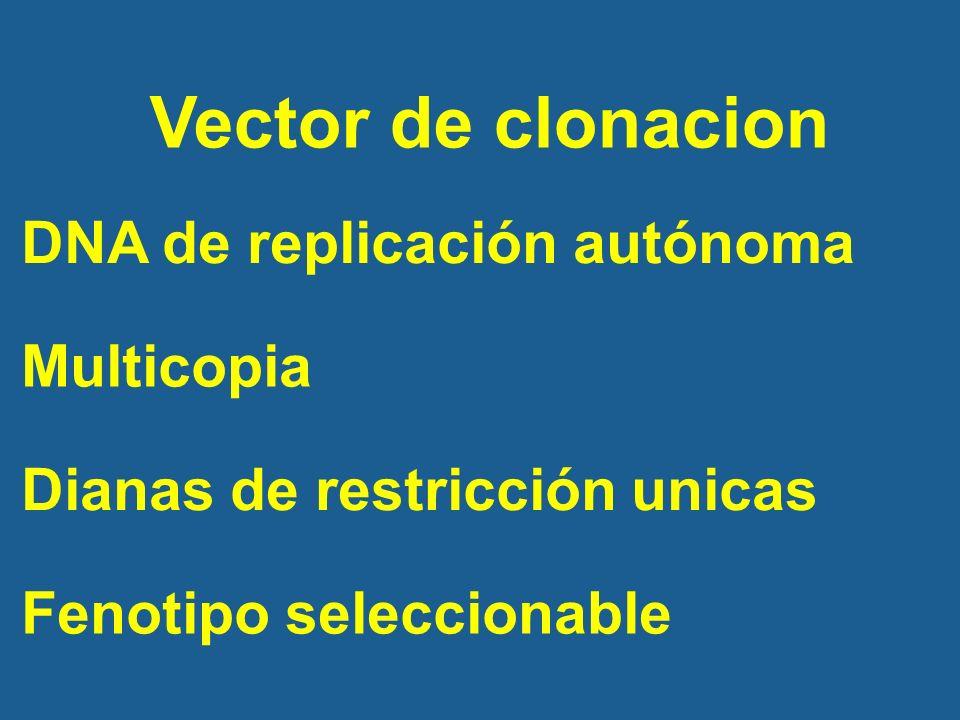 Vector de clonacion DNA de replicación autónoma Multicopia