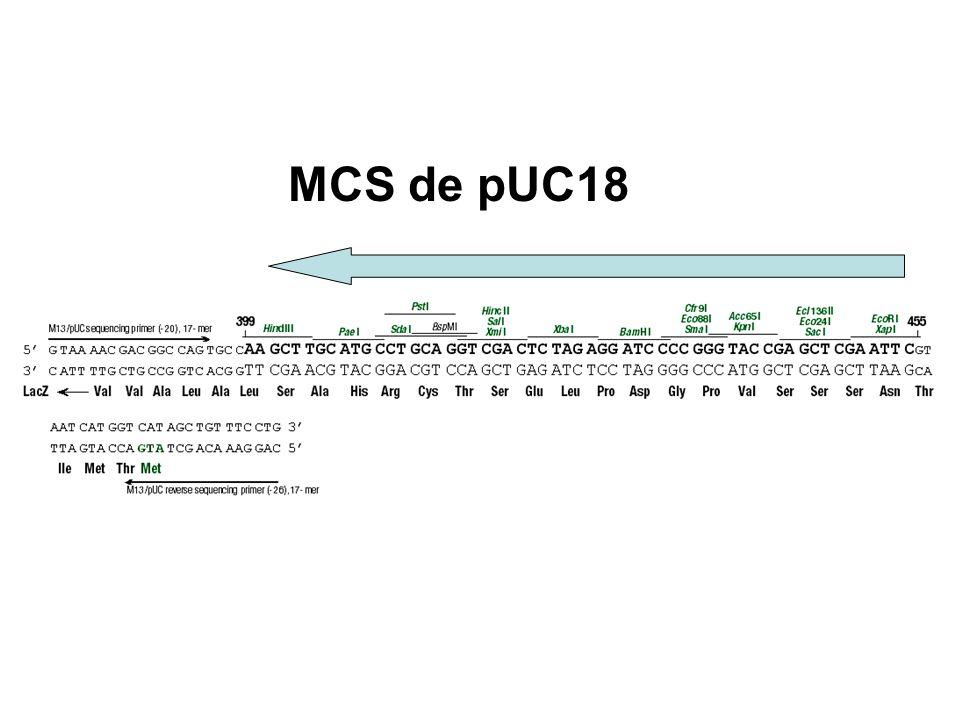 MCS de pUC18