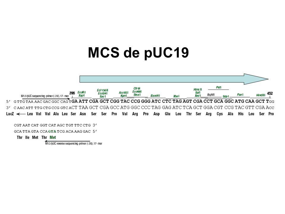 MCS de pUC19