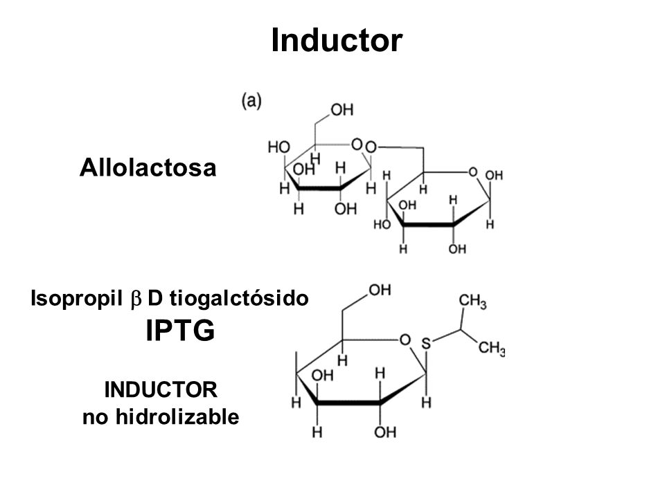 Inductor IPTG Allolactosa Isopropil b D tiogalctósido INDUCTOR