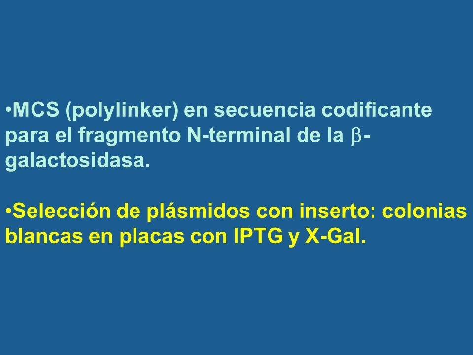 MCS (polylinker) en secuencia codificante para el fragmento N-terminal de la -galactosidasa.