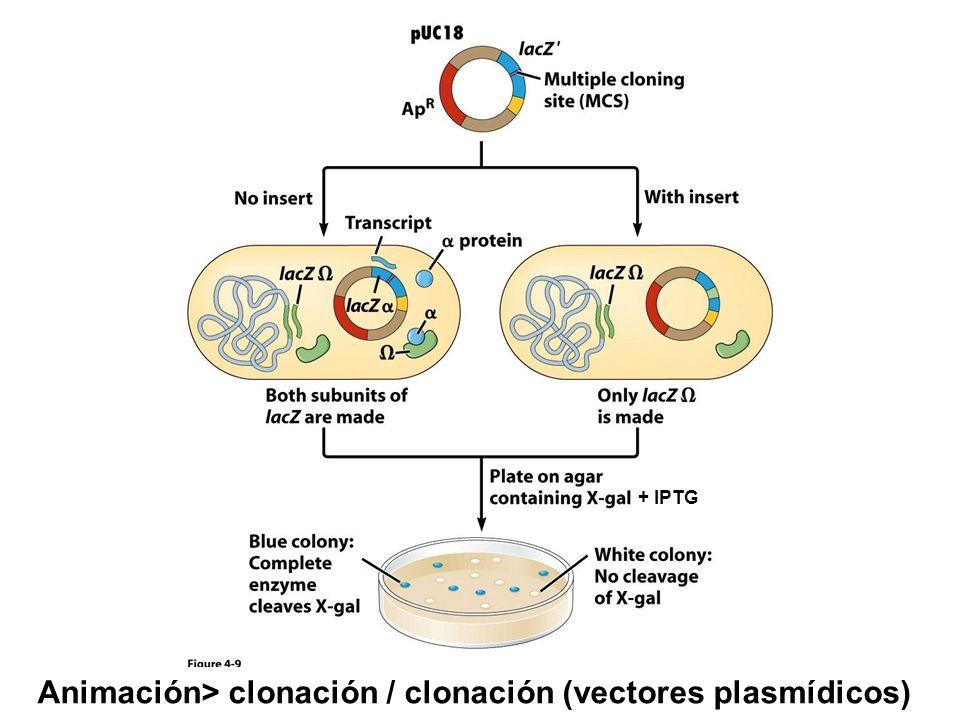Animación> clonación / clonación (vectores plasmídicos)