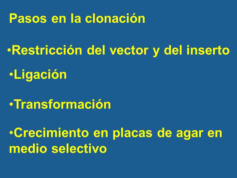 Pasos en la clonación Restricción del vector y del inserto.
