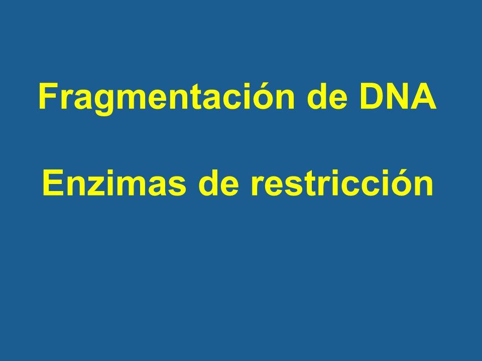 Fragmentación de DNA Enzimas de restricción