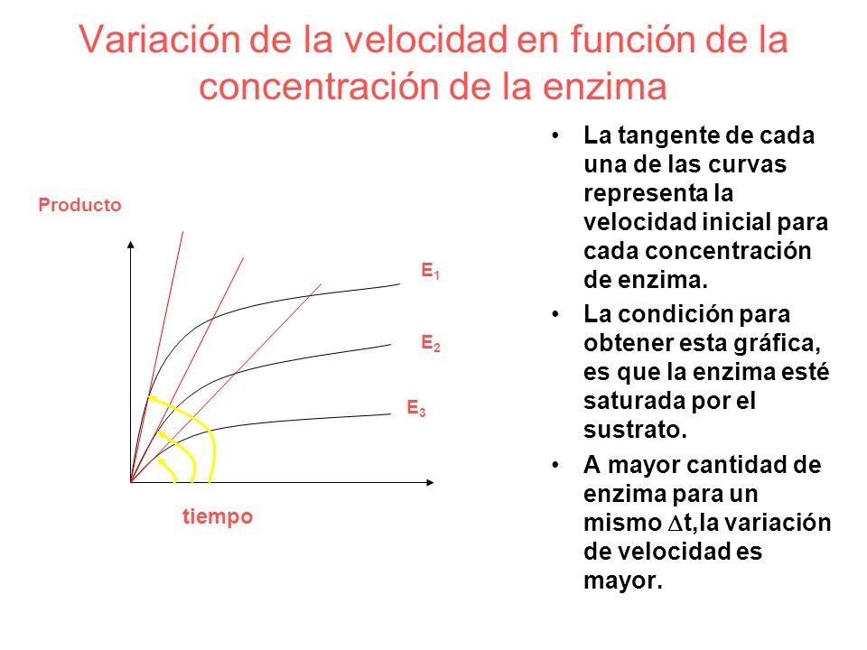 Variación de la velocidad en función de la concentración de la enzima