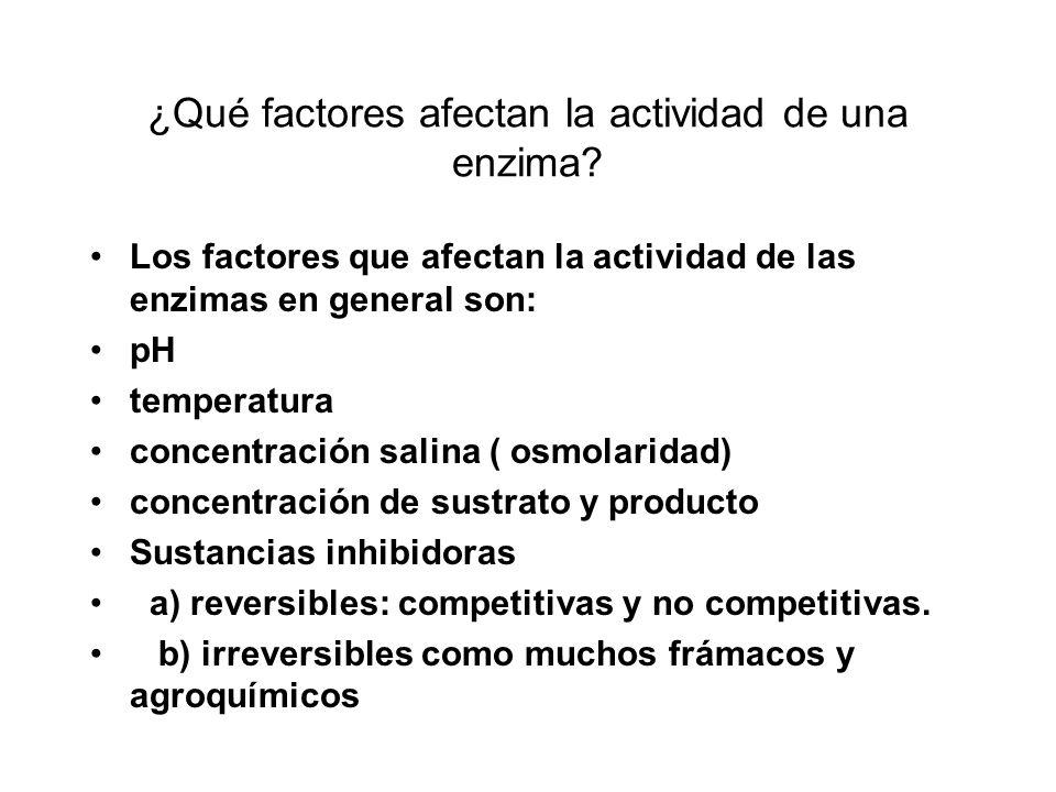 ¿Qué factores afectan la actividad de una enzima