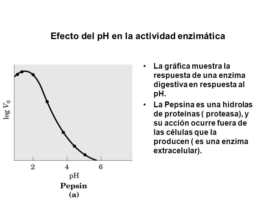 Efecto del pH en la actividad enzimática