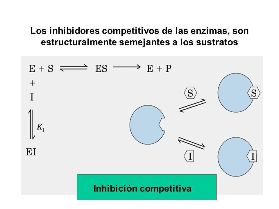 Los inhibidores competitivos de las enzimas, son estructuralmente semejantes a los sustratos
