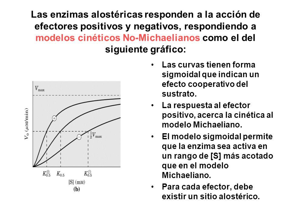 Las enzimas alostéricas responden a la acción de efectores positivos y negativos, respondiendo a modelos cinéticos No-Michaelianos como el del siguiente gráfico: