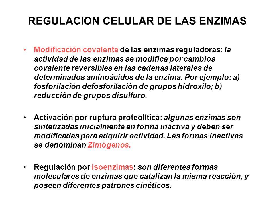 REGULACION CELULAR DE LAS ENZIMAS