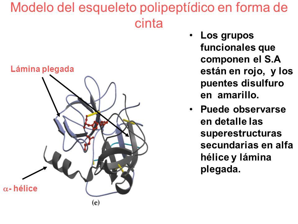 Modelo del esqueleto polipeptídico en forma de cinta