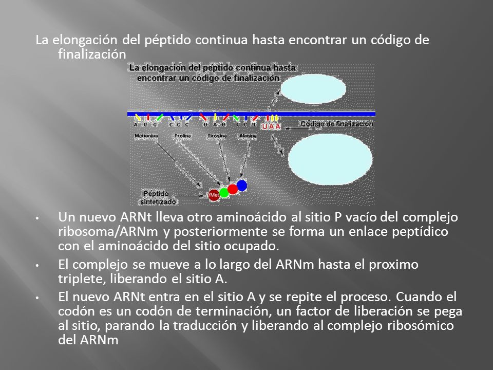 La elongación del péptido continua hasta encontrar un código de finalización