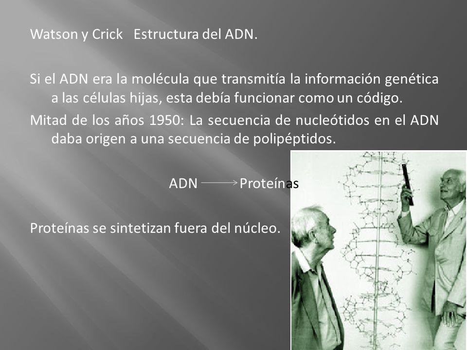 Watson y Crick Estructura del ADN