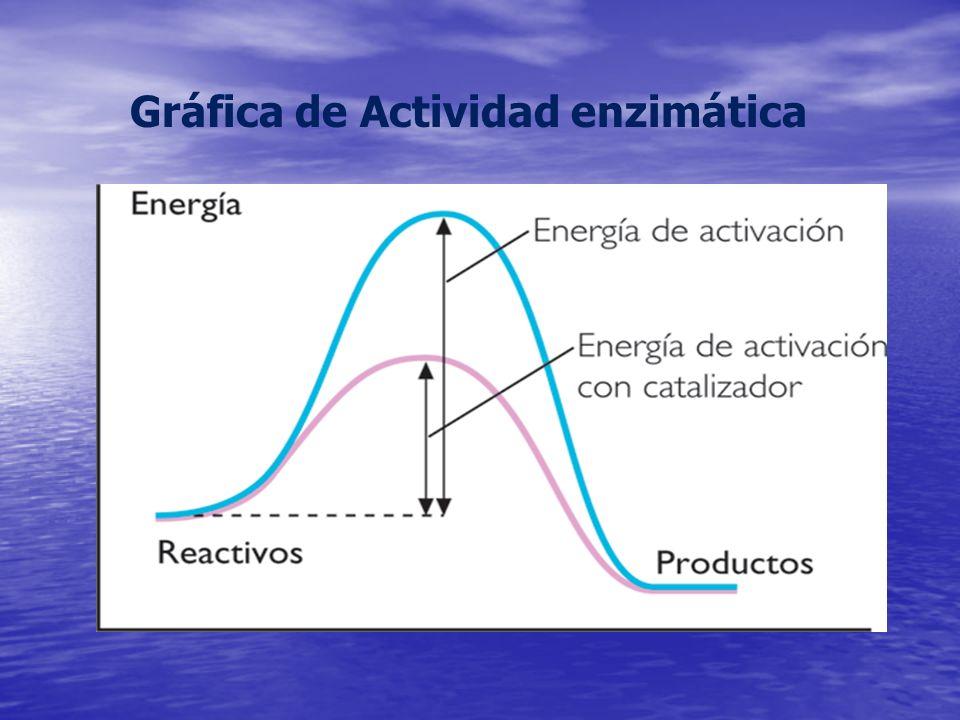 Gráfica de Actividad enzimática