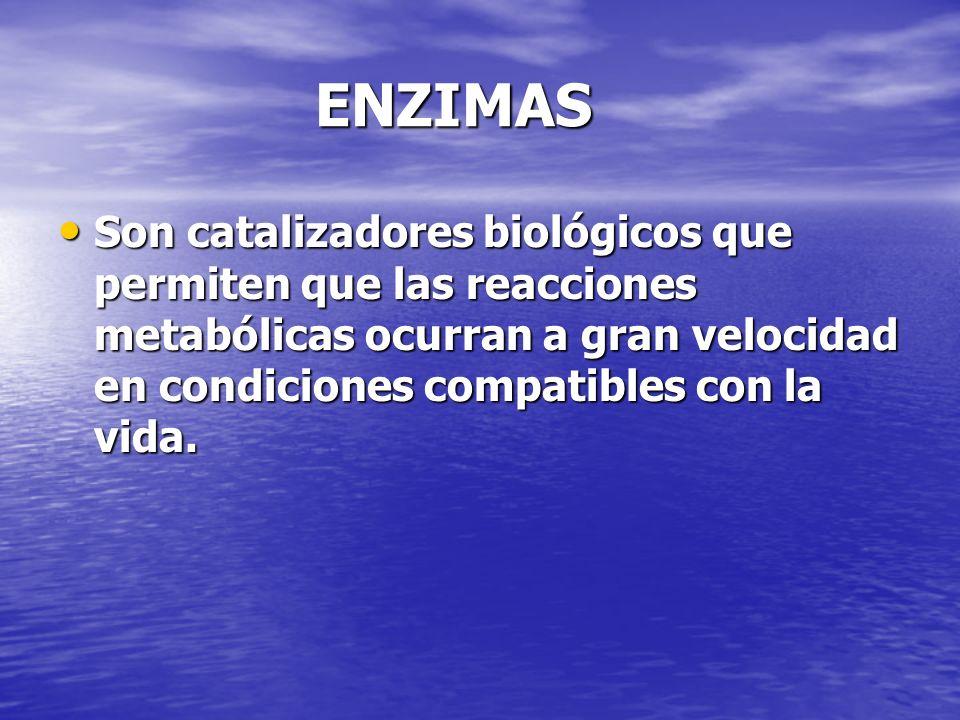 ENZIMAS Son catalizadores biológicos que permiten que las reacciones metabólicas ocurran a gran velocidad en condiciones compatibles con la vida.